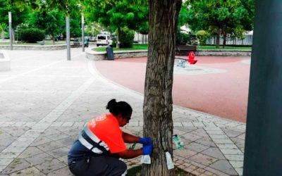 El Ayuntamiento de Caravaca de la Cruz combate la galeruca