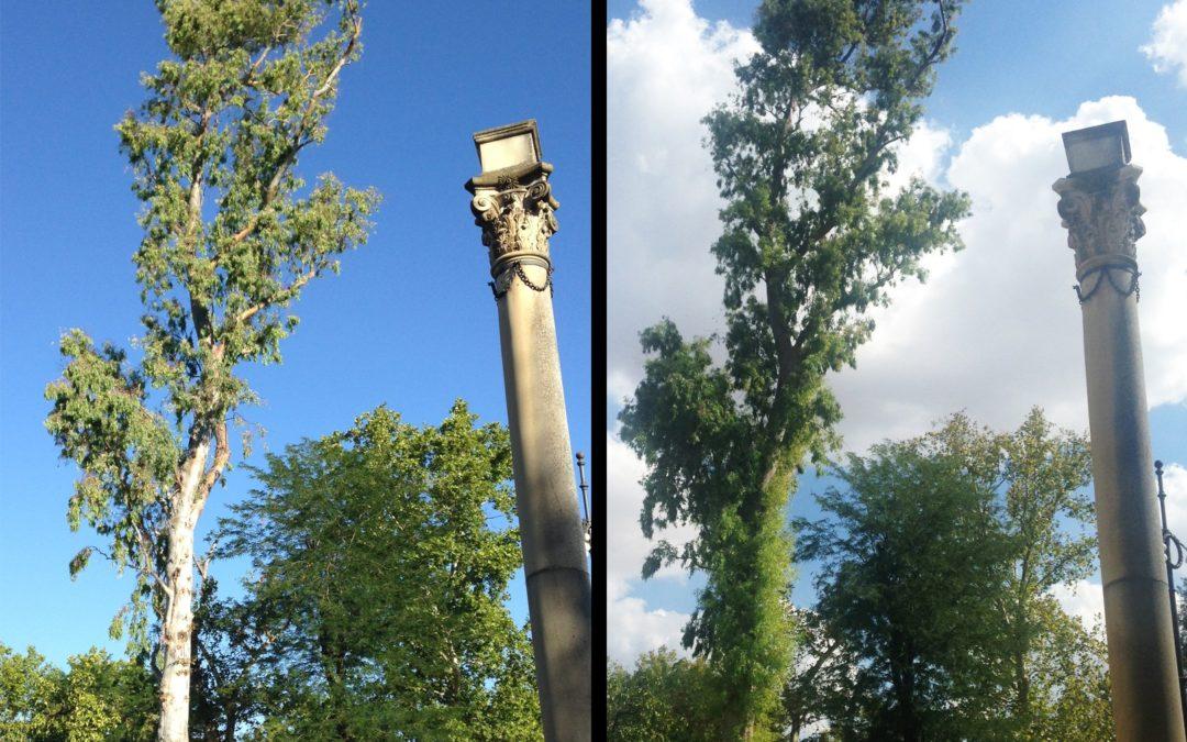 Recupera tu árbol frente a las debilidades del verano