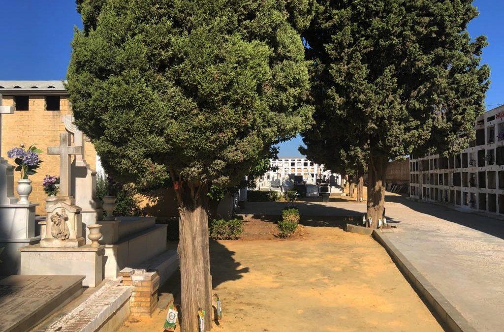 El Ayuntamiento de Sevilla trata los árboles del cementerio San Jerónimo