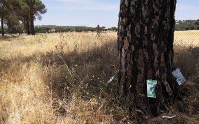 Tratamiento de endoterapia contra Tómicus en pinos