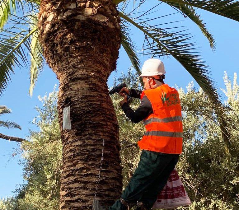 Tratamiento de las palmeras en el Hotel Royal Mansour de Marrakesh