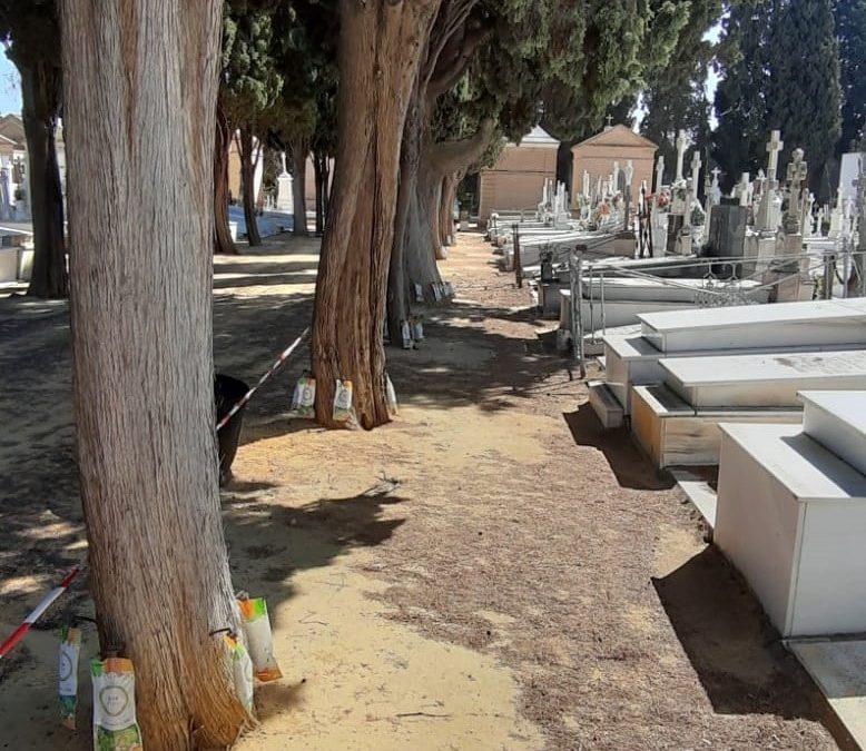 Siguen los tratamientos del Ayuntamiento de Sevilla a los árboles del cementerio