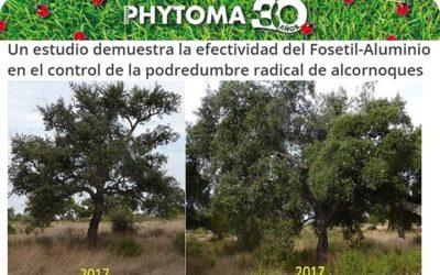 Phytoma publica la solución contra la phytophthora con endoterapia