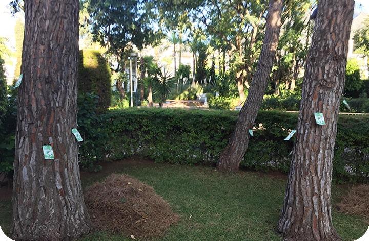 Endoterapia contra la procesionaria en Málaga