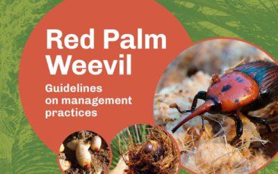 La FAO publica el Plan Integral de Control del picudo rojo