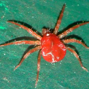 Fertinyect | Ynject GO - Araña Roja