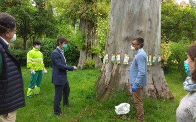 XileMax: la inyección que recupera los árboles centenarios de Sevilla – Endoterapia