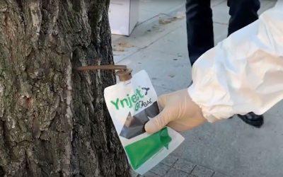 Madrid tratará la Galeruca del Olmo con Ynject Go Back: el sistema de endoterapia Pago Por Uso