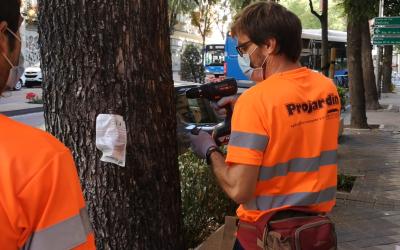 Finalización del tratamiento para  Galeruca del Olmo en Madrid